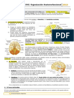 Tema 7 .pdf
