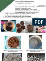 Peletización  Semilla de Pino