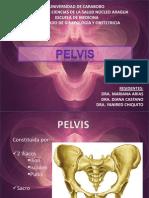 Seminario de Pelvis Compatible