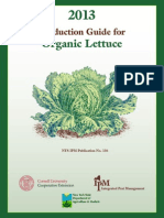 Production Guide for Organic Lettuce