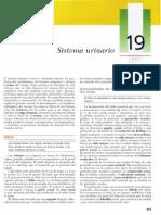 Gartner, Leslie P. - Texto Atlas de Histologia, 2da Edición [19 Sistema urinario].pdf