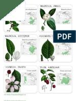 Tree Identification Cards