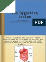 Digestive 6