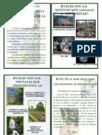 Boletin de Reforestacion
