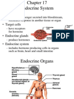 17 Endocrine System