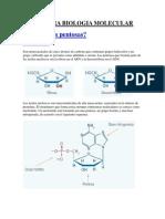 Ayuda Para Biologia Molecular