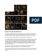 Ruminant Embryology Paper