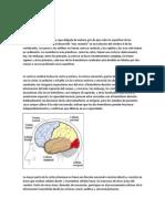La Corteza Cerebral