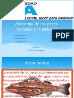 Anatomía de los peces ,molusco y crustáceos.pptx