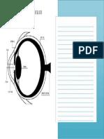 Diagrama Ochiului