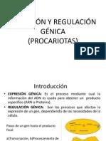 EXPRESIÓN Y REGULACIÓN GÉNICA(procariotas)estudiar