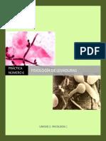 MGII_Practica_11_Fisiología-de-levaduras