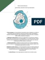 Sistema endomembranosoEliasManzano2°Ib