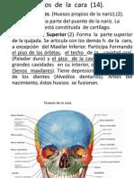 Huesos de La Cara (14)