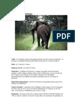Éléphants est un nom vernaculaire ambigu désignant en français certains grands mammifères