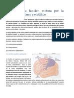 Control de la función motora por la corteza y el tronco encefálico