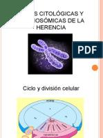 Tema 2 Cromosomas
