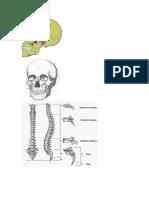 sistema óseo gral