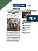 webtopdf document pdf