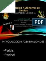 Pelvis&Perine