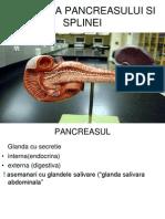 2691285 Anatomia Pancreasului Si Splinei