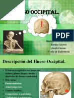 huesooccipital-120130154334-phpapp02