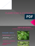 Pl Tox c Iva - Plante Toxice Cultivate