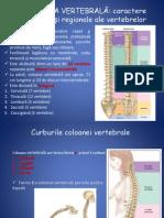 anatomie lp2 2