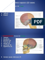 Anatomie Lp3 Ro