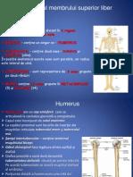 anatomie lp4 4