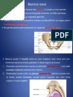 anatomie lp5