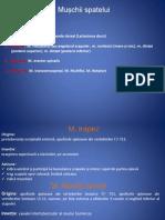 anatomie lp8