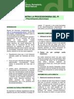 FI Processionaria