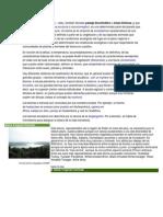 Tipos de Biomas de Guatemala