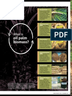 What is Oil Palm Biomass