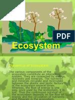 2-dynamicsofecosystem-121129013419-phpapp01