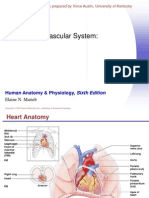 FL-K24 Cardiovascular System