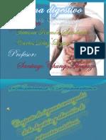 Sistema Digestivo Segundo Puesto