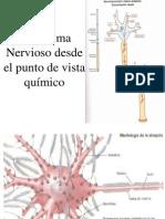 Sistema Nervioso Desde Punto de Vista Quimico