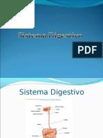 Sistema Digestivo Tercer Puesto