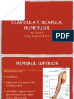 Lp3 Clavicula, Scapula, Humerus