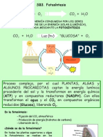 presenatcion fotosintesis2