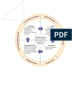 Diagrama flujo 5S