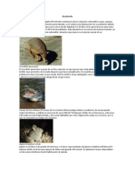 Fauna y Flora de Centro America