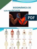 07 Apoyo Biodinamica de Los Musculos