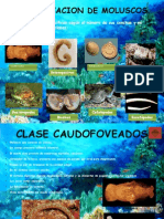 Clasificacion de Moluscos