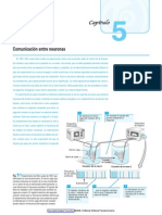 Neuropsicología Humana 2006.pdf