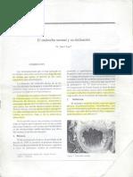 El Endotelio Normal y Su Disfuncion