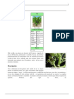 Vitis.pdf-7