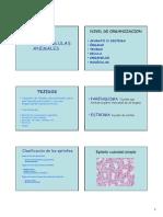 02 - Tejidos y Celulas Animales(1)